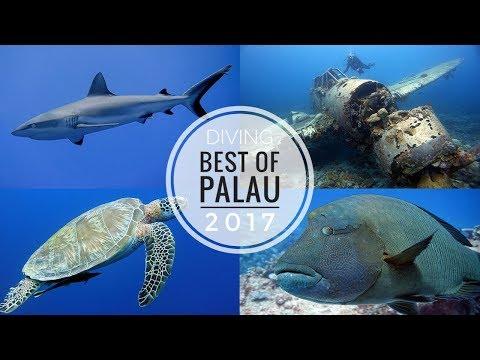 Tauchen in Palau (Blue Corner, German Channel, Jake Seaplane u.v.m.)
