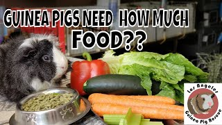 Do I feed too much? How Much Food is Enough for your Guinea Pig?