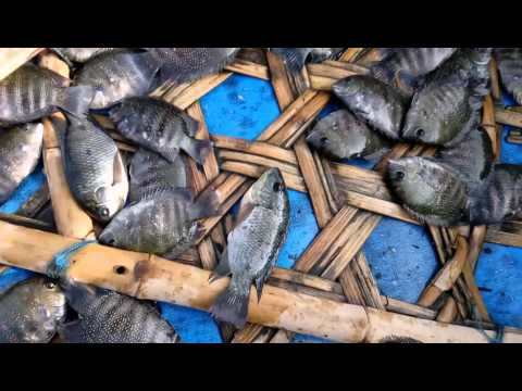 River fishing  at cauvery river tamilnadu india - Youtube