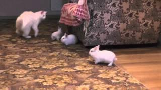 игра кроликов с кошкой