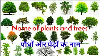 पौधों और पेड़ों का नाम    Name of plants and trees    Trees name    Easy english learning process screenshot 1