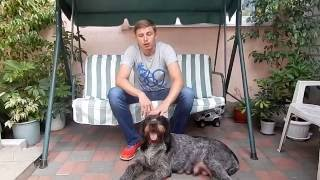 Уход за щенками в первую неделю жизни - Неделя 1 (Уход за щенками день за днем)