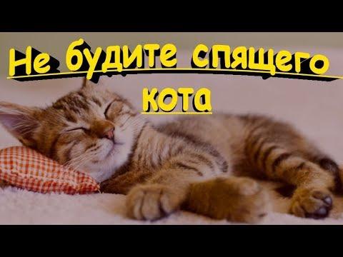Вопрос: Почему не следует будить кошку?