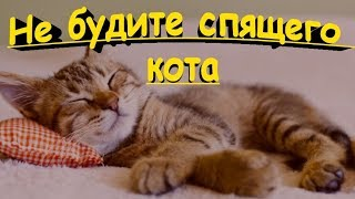 НЕ БУДИТЕ СПЯЩЕГО КОТА  DO NOT WAKE SLEEPING CAT