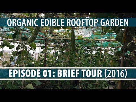 Organic Rooftop Gardening - Brief Tour (2016)