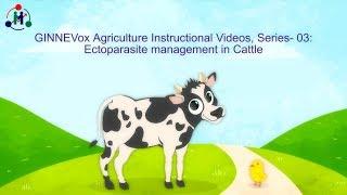 Video Story Creation Services for Rural Market, VoxCom | MGINNE