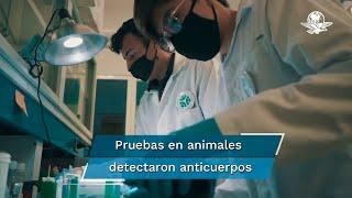 México podría tener su propia vacuna contra Covid-19, luego de que científicos de Querétaro, reportaran avances de estudios que realizan en animales