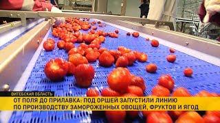Под Оршей запустили линию по производству замороженных овощей, фруктов и ягод