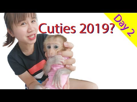 Monkey Baby Cutest You Have Ever Seen 2019 | Day 2 Get Acquainted