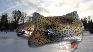 Как ловить Форель зимой?(В этом небольшом видео рыболовы на водоеме Карпов пруд(Серпухов, Арнеево) показывают, как ловить форель..., 2017-02-06T08:52:44.000Z)