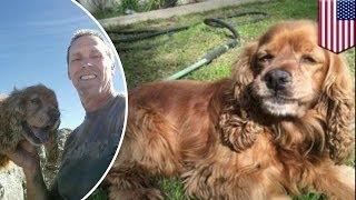 Украденная собака воссоединилась с хозяевами