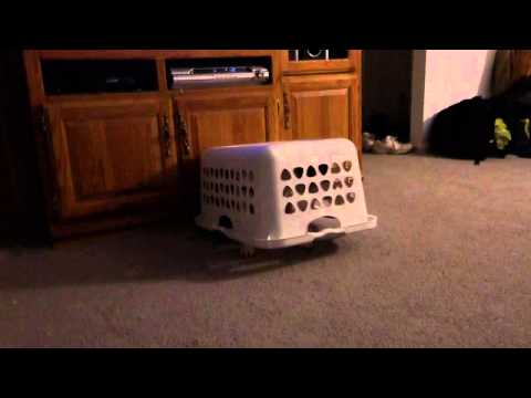 Stupid Dog stuck under laundry basket