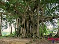 Sundariye vaa | Evergreen malayalam  album song