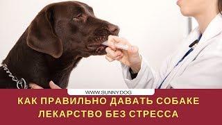 Как правильно давать собаке лекарство без стресса?