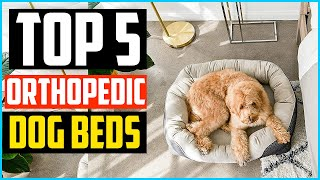 Top 5 Best Orthopedic Dog Beds Review In 2020