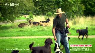 A Different Breed Ep3 Dog Behaviourist