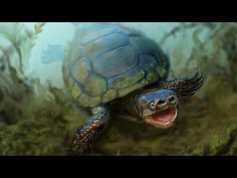 Extinct 'bacon tortoise' species unearthed