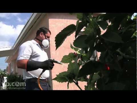 Keys Pest Control Key West FL Insect Control Exterminator