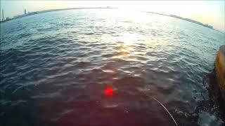 Video 大阪湾セル石でのシーバス釣行動画 download MP3, 3GP, MP4, WEBM, AVI, FLV Juli 2018