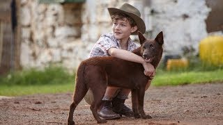 Bleu, mon chien d'Australie
