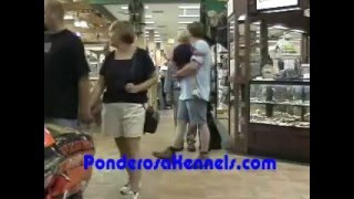 Obedience Training Heeling Off Leash In A Busy Store With Maryland Dog Trainer Pat Nolan