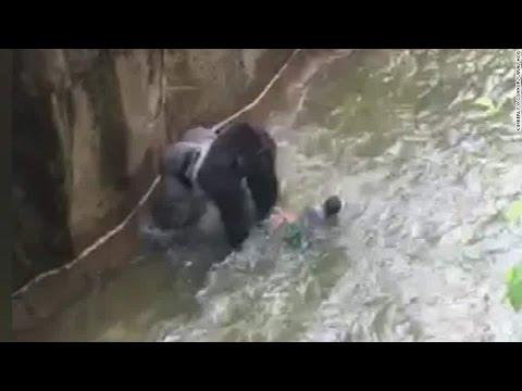 Baby falls into Gorilla Pit at Cincinnati Zoo