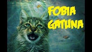 La razón por la que los gatos le tienen miedo al agua