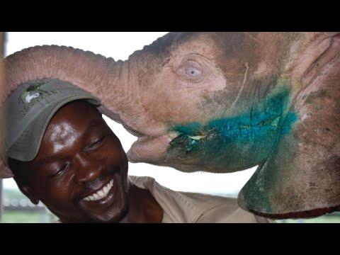 Save the Elephant Day  Orphan albino elephant Khanyisa's three month rehabilitation