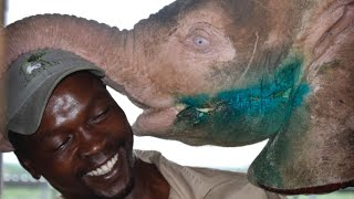 Save the Elephant Day - Orphan albino elephant Khanyisa's three month rehabilitation