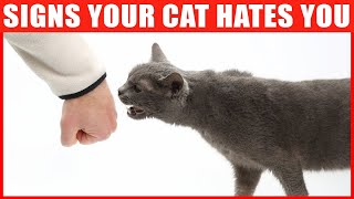 14 Signs Your Cat Hates You