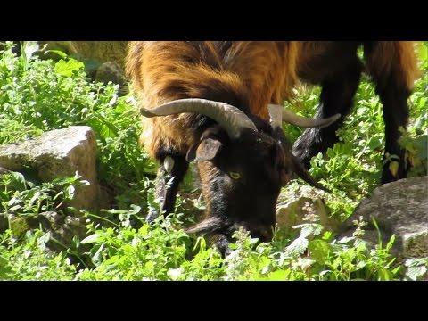 Trip to avakas gorge-vlog #4-Cyprus vlog