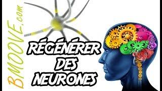 Comment aider son cerveau à générer de NOUVEAUX NEURONES