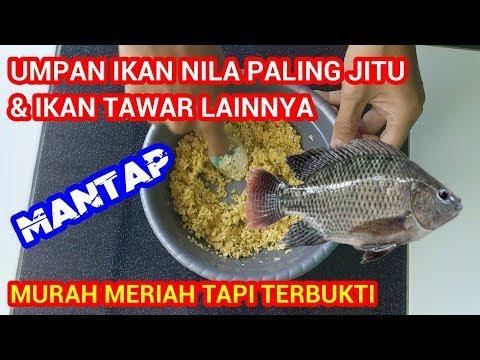 Umpan Ikan Nila Paling Ampuh Jitu Untuk Semua Ikan Tawar Youtube