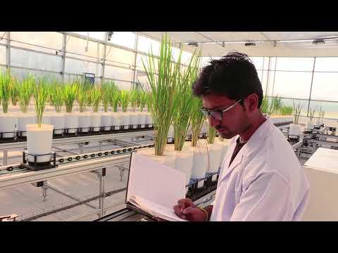 Plant Phenomics ICAR- IARI