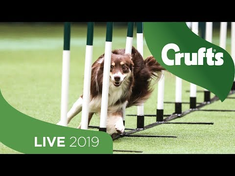 Crufts 2019 Day 4 - Part 1 LIVE