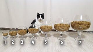 7 Levels of Cat's Survival