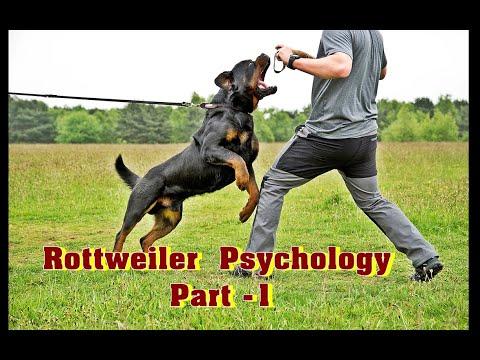ராட்வீலர் நாய்களின் உண்மை முகமும், மனவியலும் -1 | Rottweiler Psychology -1