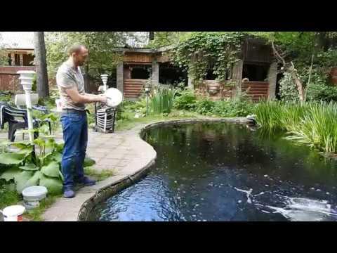 Нитчатые или нитевидные водоросли в пруду. Средство для борьбы с водорослями FadenAlgenVernichter