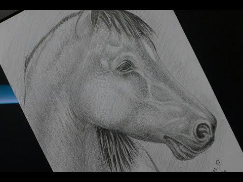 Рисуем лошадь карандашом  Ein Pferd zeichnen lernen