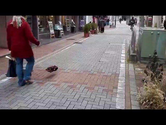 透明犬の散歩 長野二線路通り エアー犬
