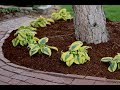 Planting A Hedge Of Autumn Frost Hostas Garden Answer mp3