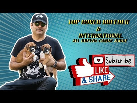 Top Boxer Breeder in India | International All Breeds Canine Judge