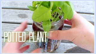 Download Video DIY // Potted Plant MP3 3GP MP4