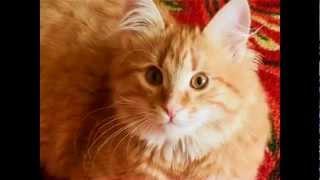 Download Рыжий кот. Веселая детская песенка Mp3 and Videos