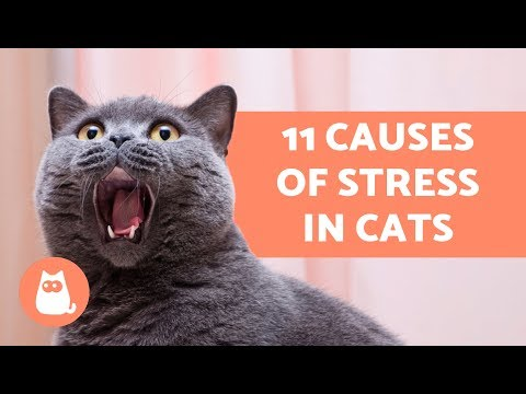11 Causes of Stress in Cats