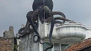 Video Misteri Rumah Gurita di Bandung download MP3, 3GP, MP4, WEBM, AVI, FLV Agustus 2018