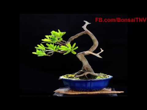 Collection of small bonsai art work is also very artistic