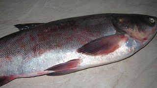 Как правильно и быстро разделать рыбу(ТОЛСТОЛОБИК)
