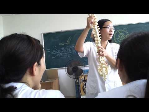 xương cột sống, cách phân biệt các loại đốt sống