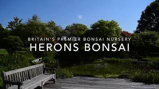 how to propogate bonsai make cuttings